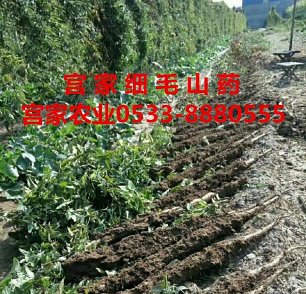 淄博宫家农业拉长产业链促发展